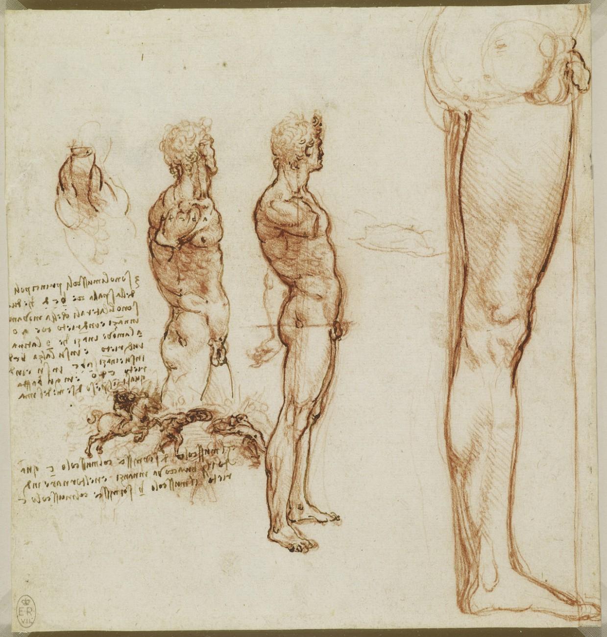 estudio anatomico leornado 6