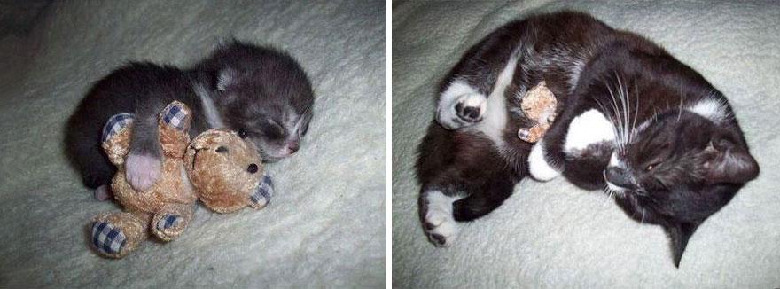 fotografias de gatos cuando eran pequeños y ahora de adultos 1