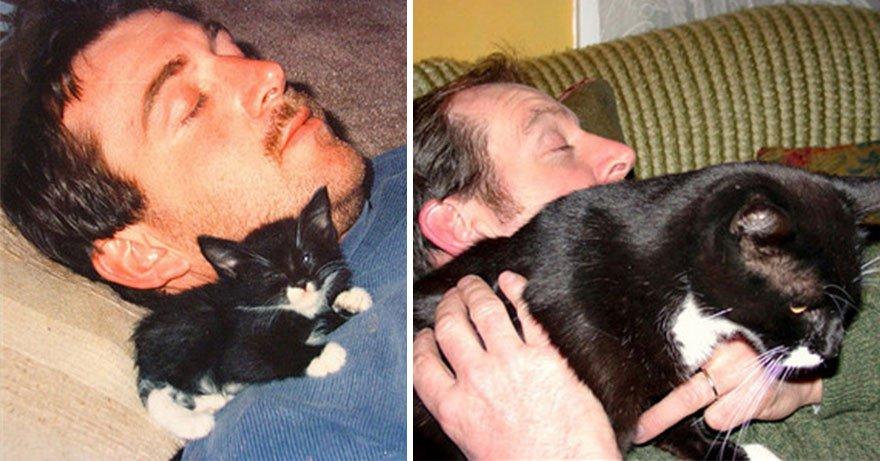 fotografias de gatos cuando eran pequeños y ahora de adultos 12