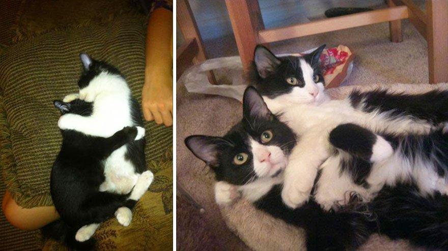 fotografias de gatos cuando eran pequeños y ahora de adultos 14