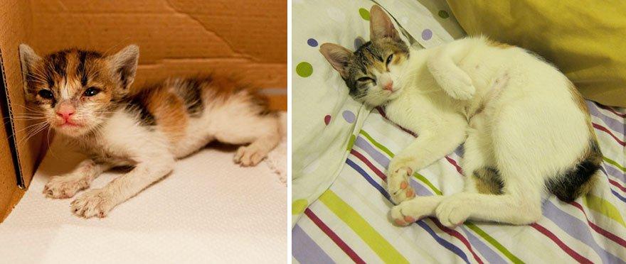 fotografias de gatos cuando eran pequeños y ahora de adultos 15