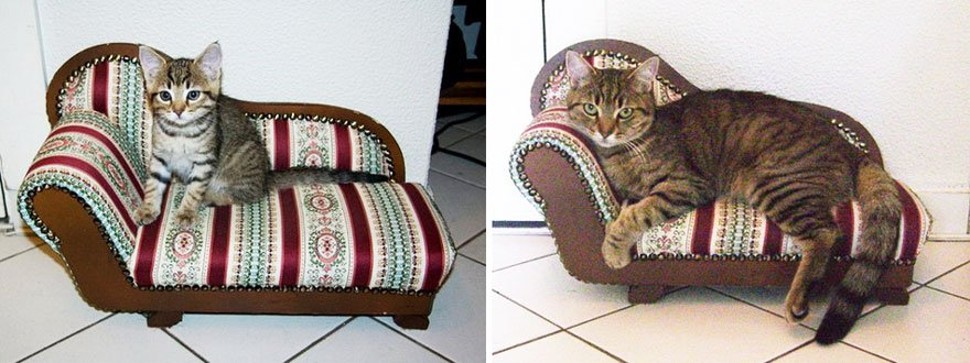 fotografias de gatos cuando eran pequeños y ahora de adultos 17