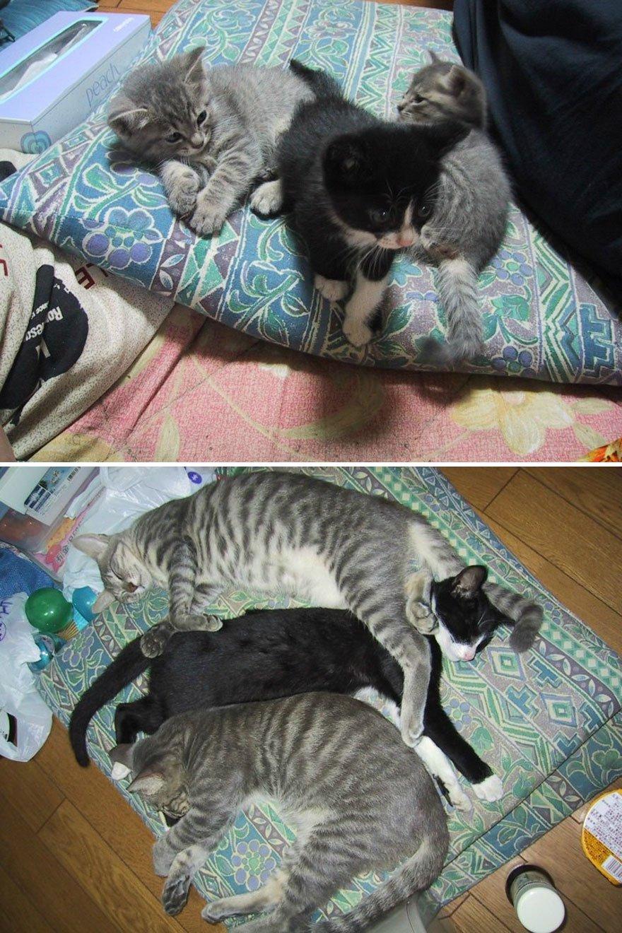 fotografias de gatos cuando eran pequeños y ahora de adultos 18
