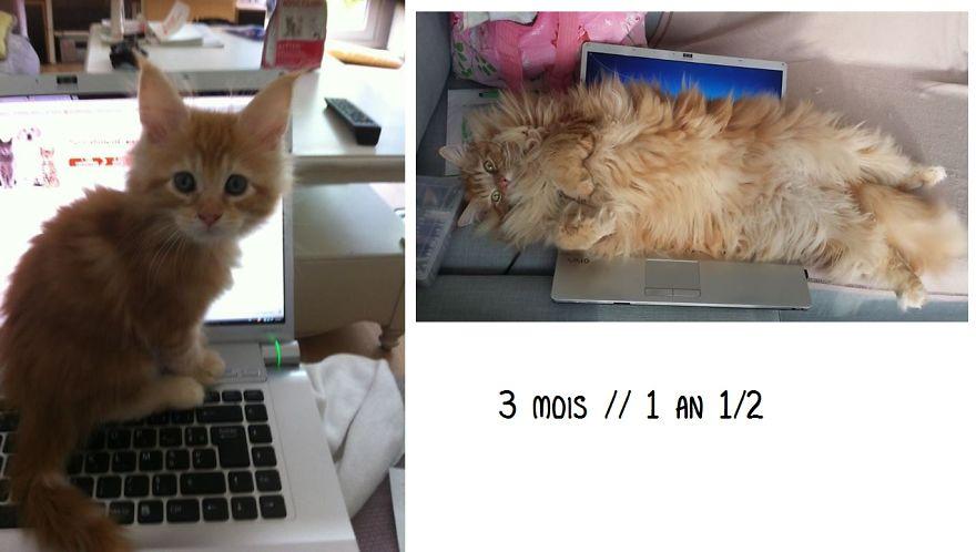 fotografias de gatos cuando eran pequeños y ahora de adultos 20