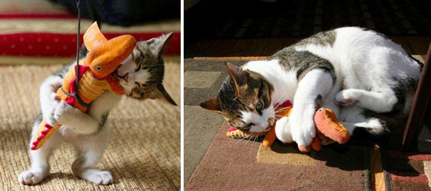 fotografias de gatos cuando eran pequeños y ahora de adultos 24