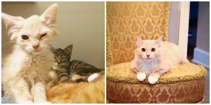 fotografias de gatos cuando eran pequeños y ahora de adultos 25