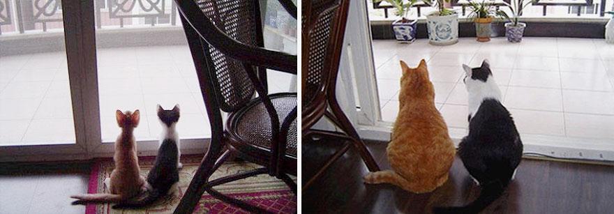 fotografias de gatos cuando eran pequeños y ahora de adultos 4