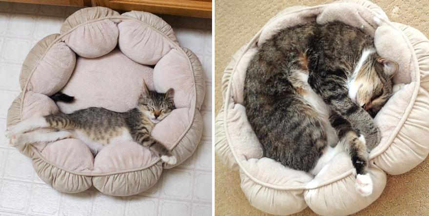 fotografias de gatos cuando eran pequeños y ahora de adultos 5