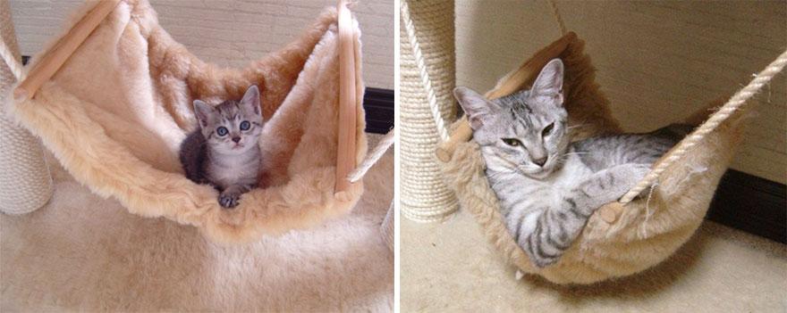 fotografias de gatos cuando eran pequeños y ahora de adultos 7