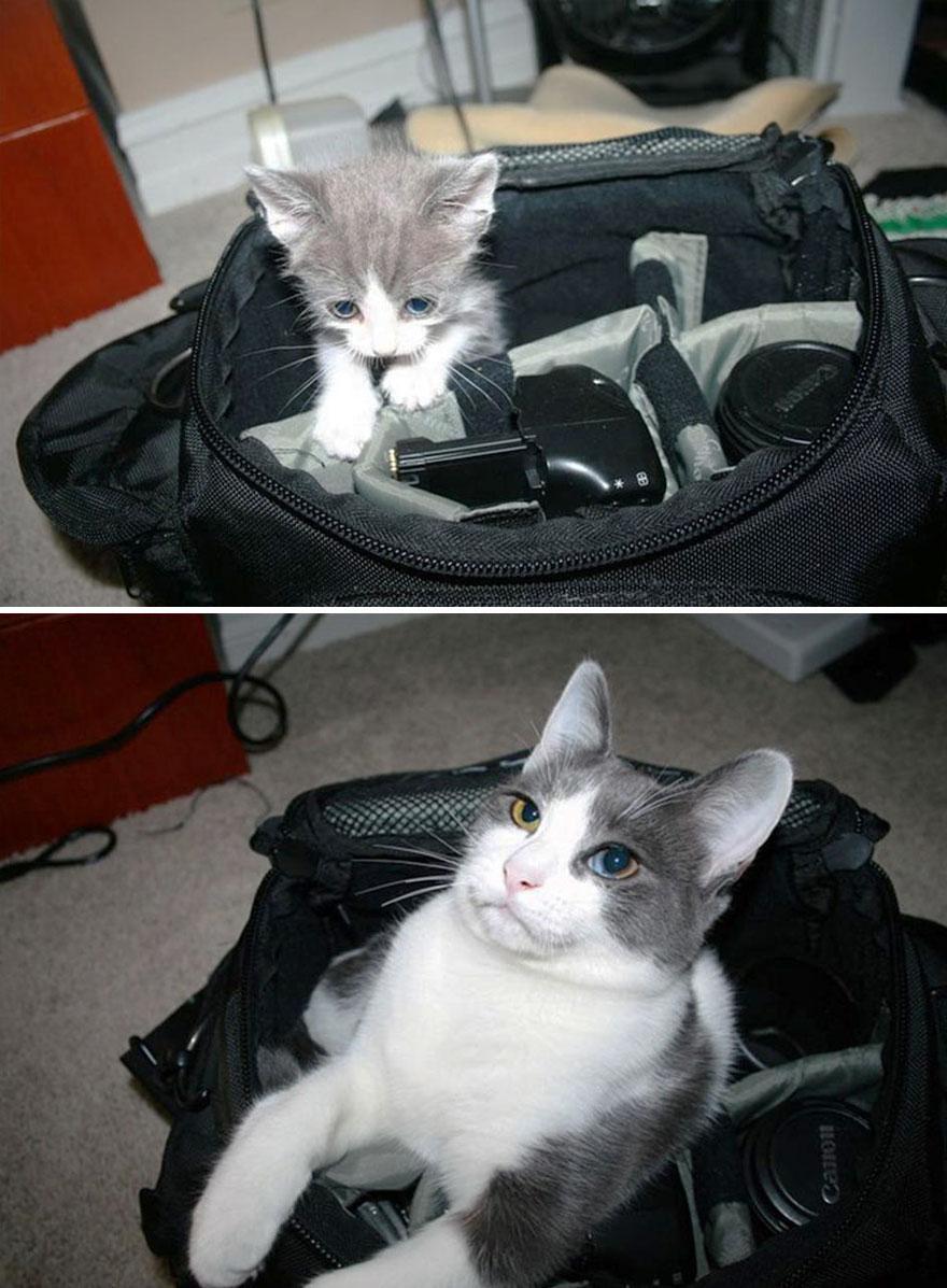 fotografias de gatos cuando eran pequeños y ahora de adultos 8