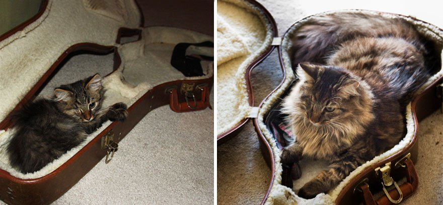 fotografias de gatos cuando eran pequeños y ahora de adultos 9