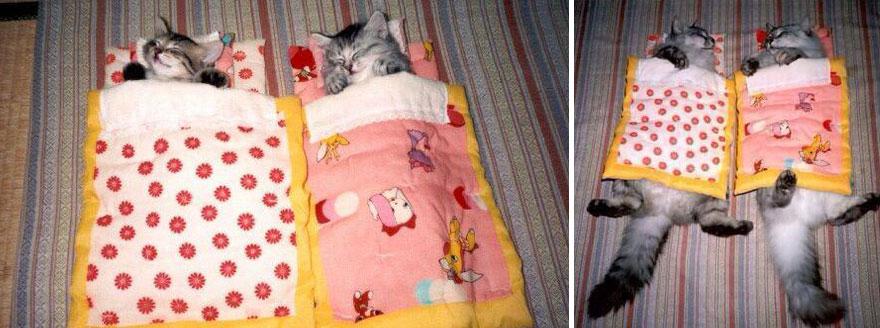 gatos antes y ahora