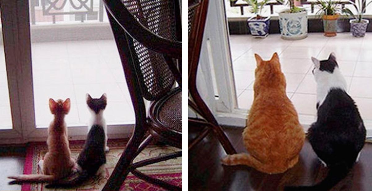 gatos antes y despues de crecer