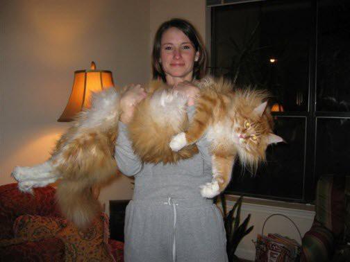 gatos_gigantes_12