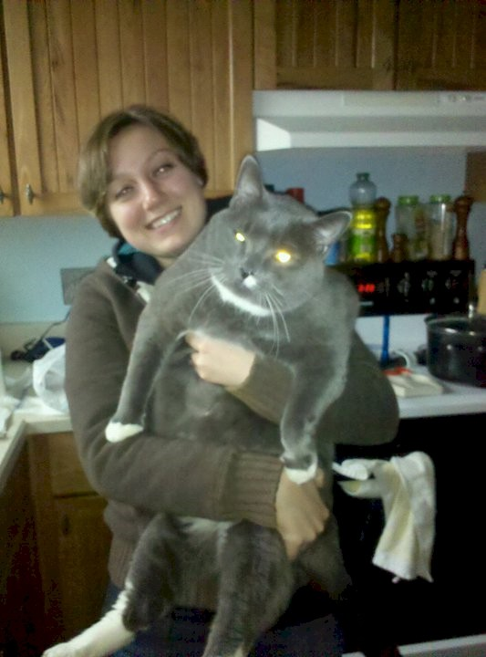 gatos_gigantes_15