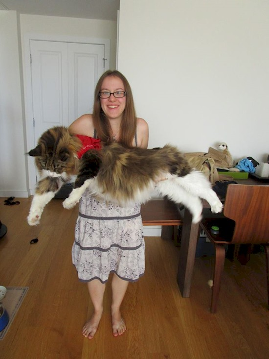 gatos_gigantes_3