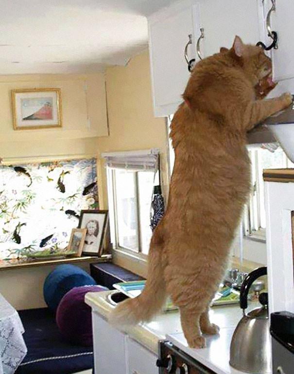 gatos_gigantes_4