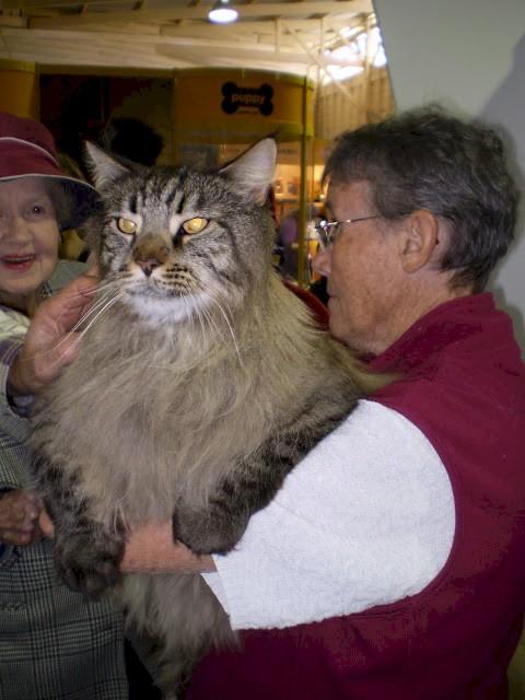 gatos_gigantes_6
