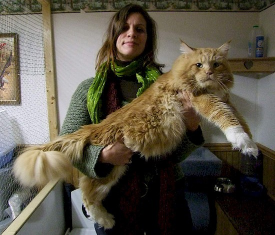 gatos_gigantes_9