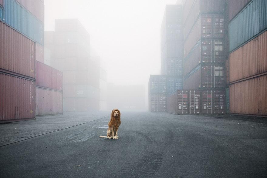 la fotografa julia marie werner retrata a su perro acomo si fuera un leon 1
