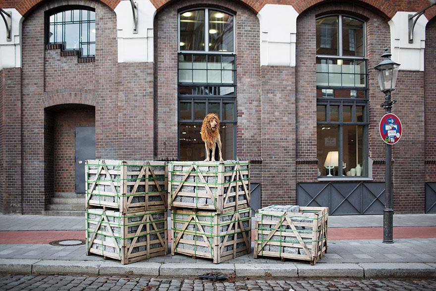la fotografa julia marie werner retrata a su perro acomo si fuera un leon 10