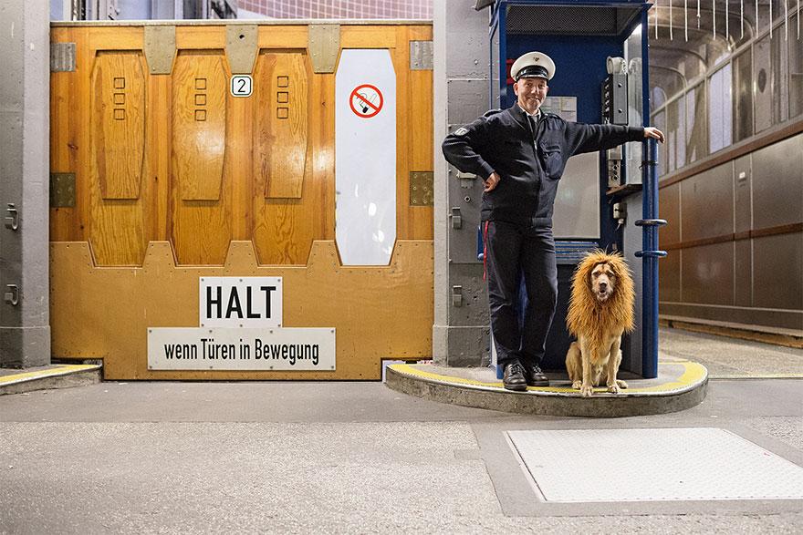 la fotografa julia marie werner retrata a su perro acomo si fuera un leon 9