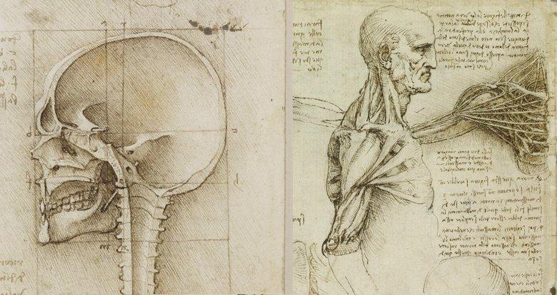 Se hacen públicos los estudios anatómicos de Leonardo Da Vinci y son ...