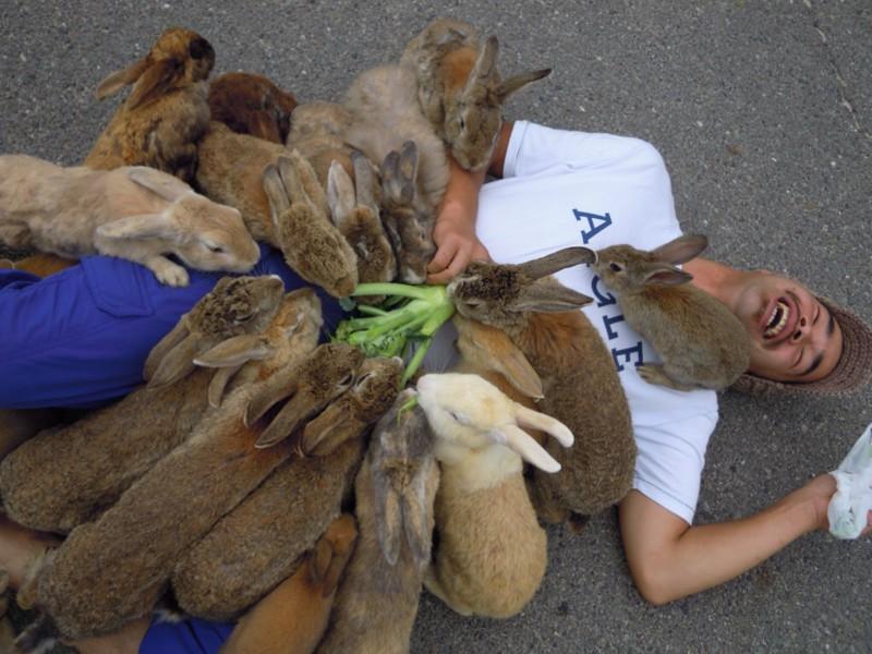 los ataques más salvajes y adorbales de animales a humanos 1