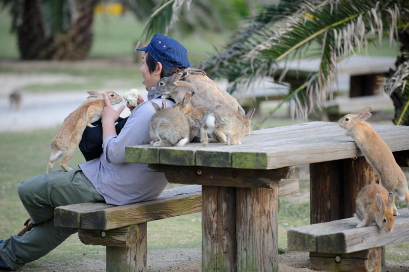 los ataques más salvajes y adorbales de animales a humanos 10