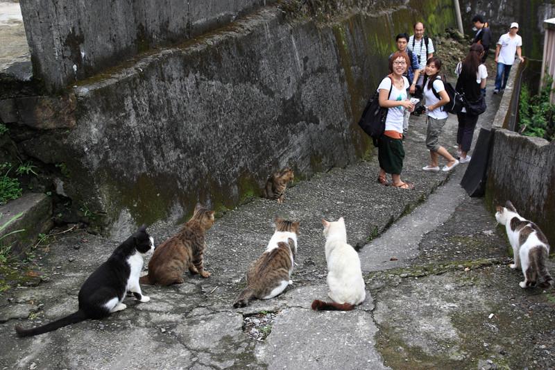los ataques más salvajes y adorbales de animales a humanos 13