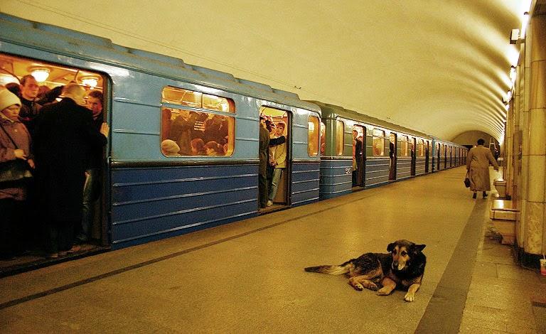 perros metro moscu 2