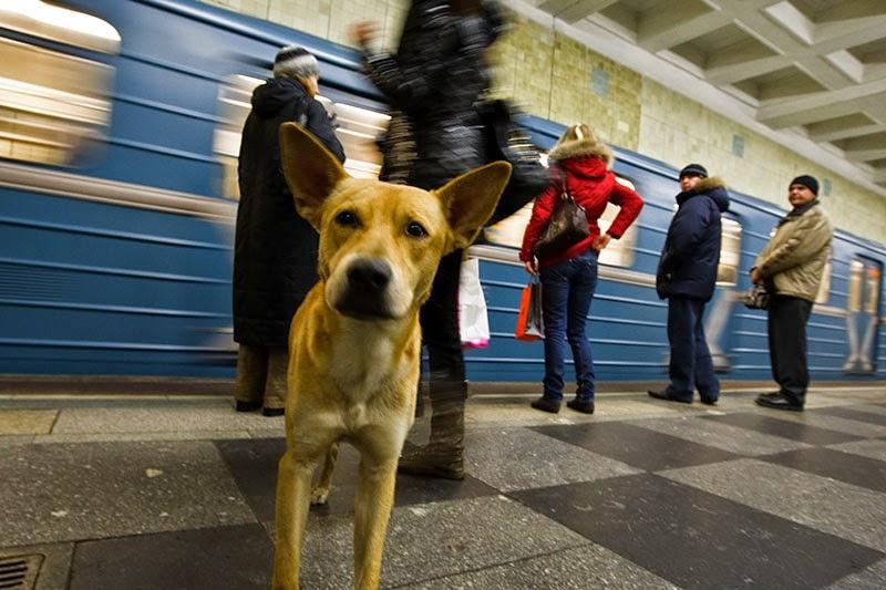 perros metro moscu 3