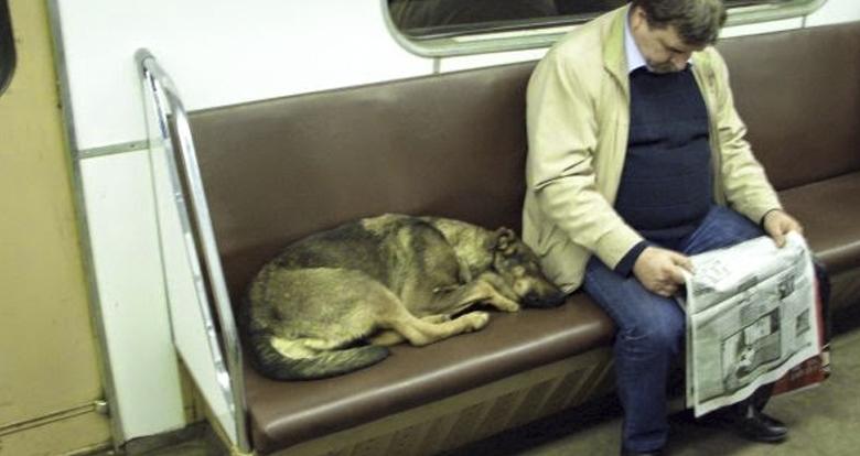 perros-metro-moscu