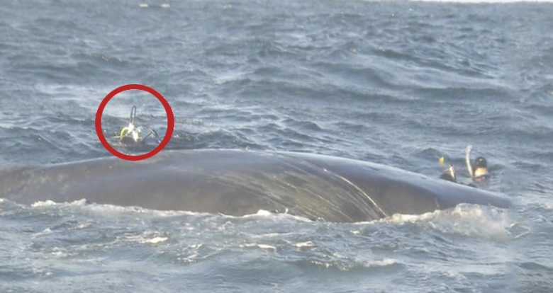 rescate-ballena
