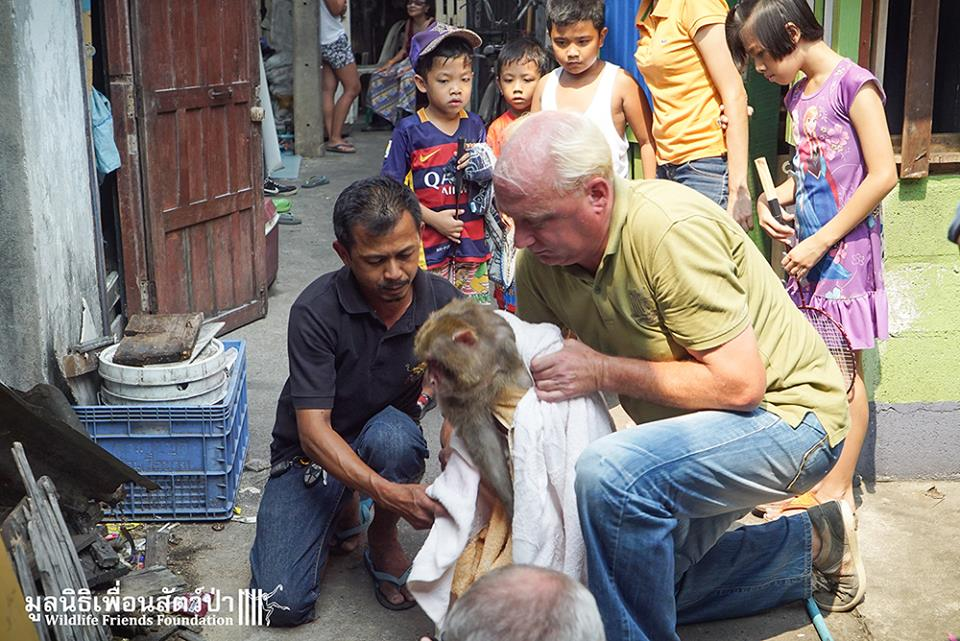 simio rescatado en un agujero de thailandia 10