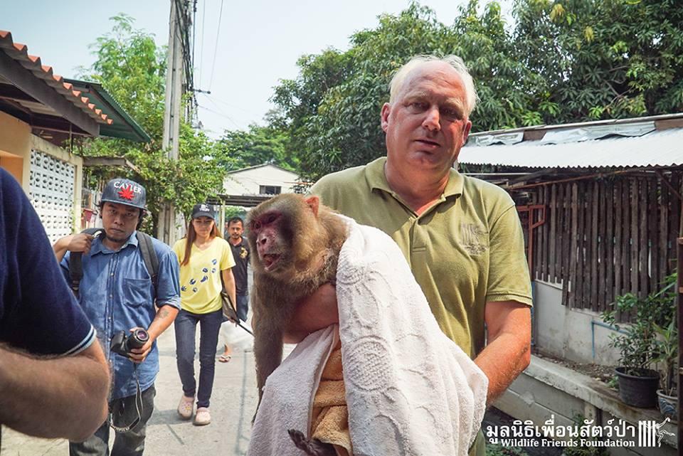 simio rescatado en un agujero de thailandia 11