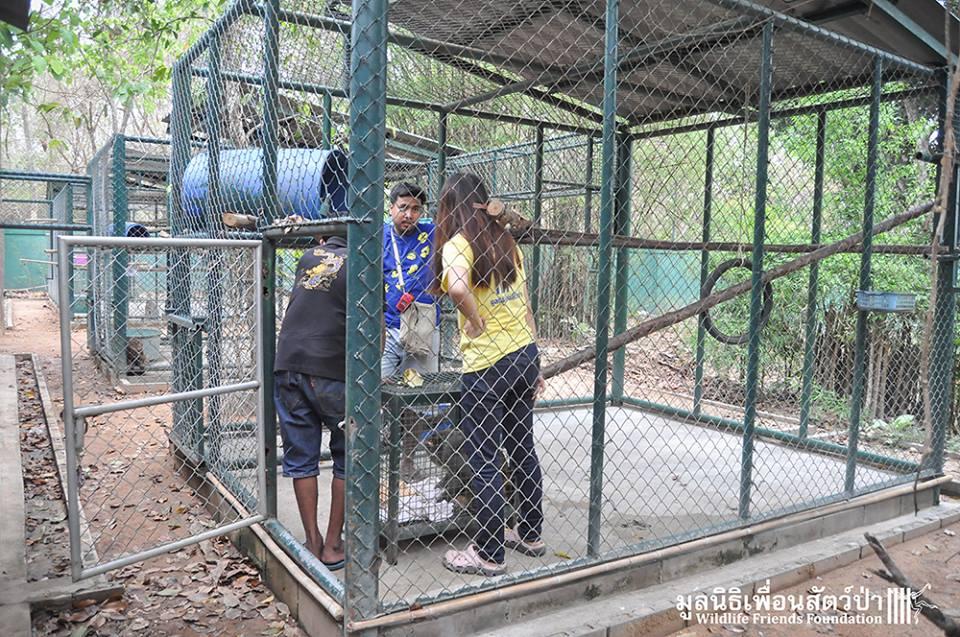 simio rescatado en un agujero de thailandia 15