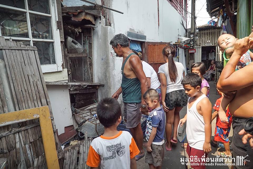 simio rescatado en un agujero de thailandia 5