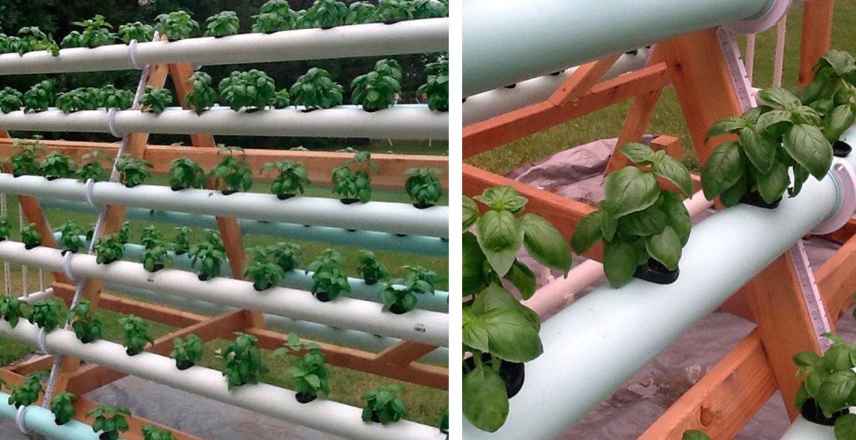 sistema de cultivo hidroponico casero