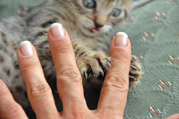 Claws and fingers