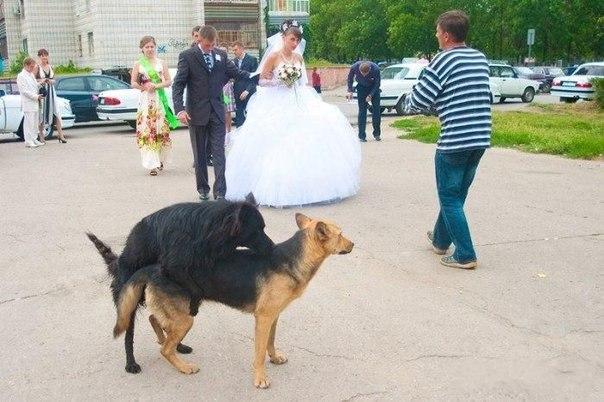 así son las bodas en Rusia y en Ucrania 13