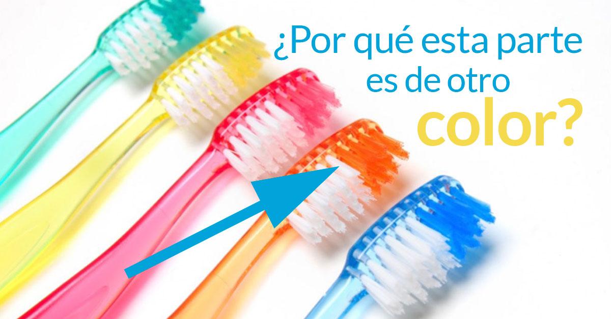 cepillo-dientes-curiosidad