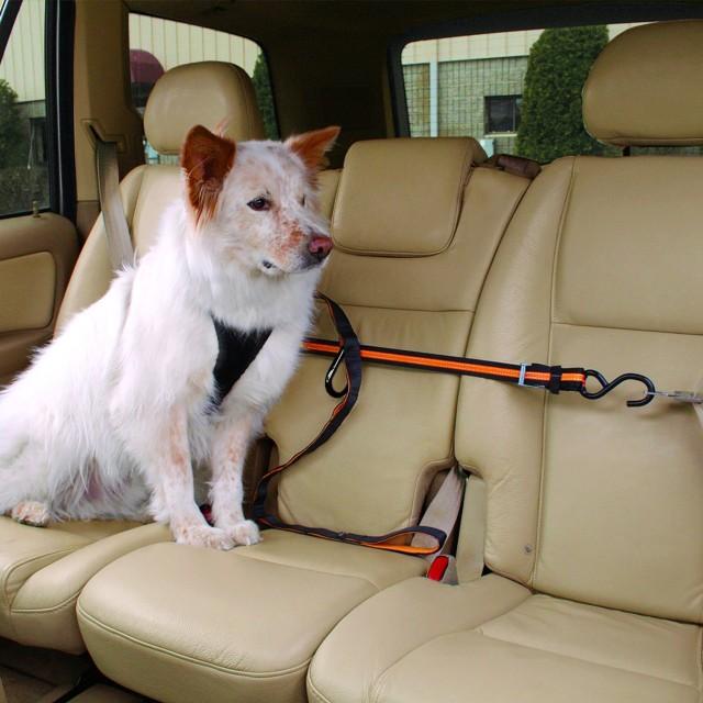 cinturón de seguridad para perros 3