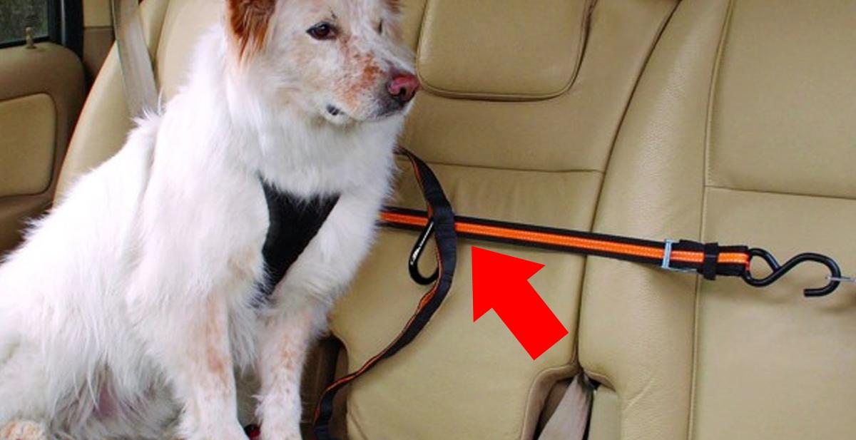 cinturon-seguridad-perros