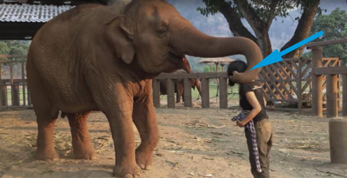 elefante_portada