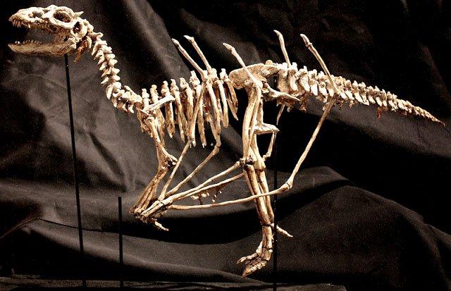 esqueletos sobrenaturales 4