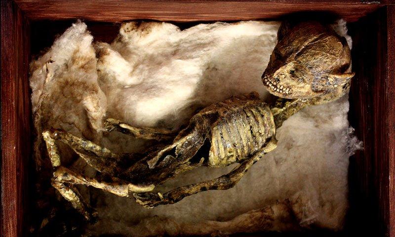 esqueletos sobrenaturales 7