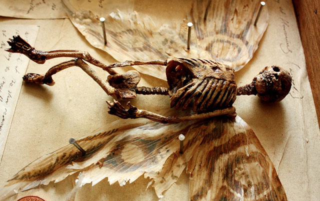 esqueletos sobrenaturales 9