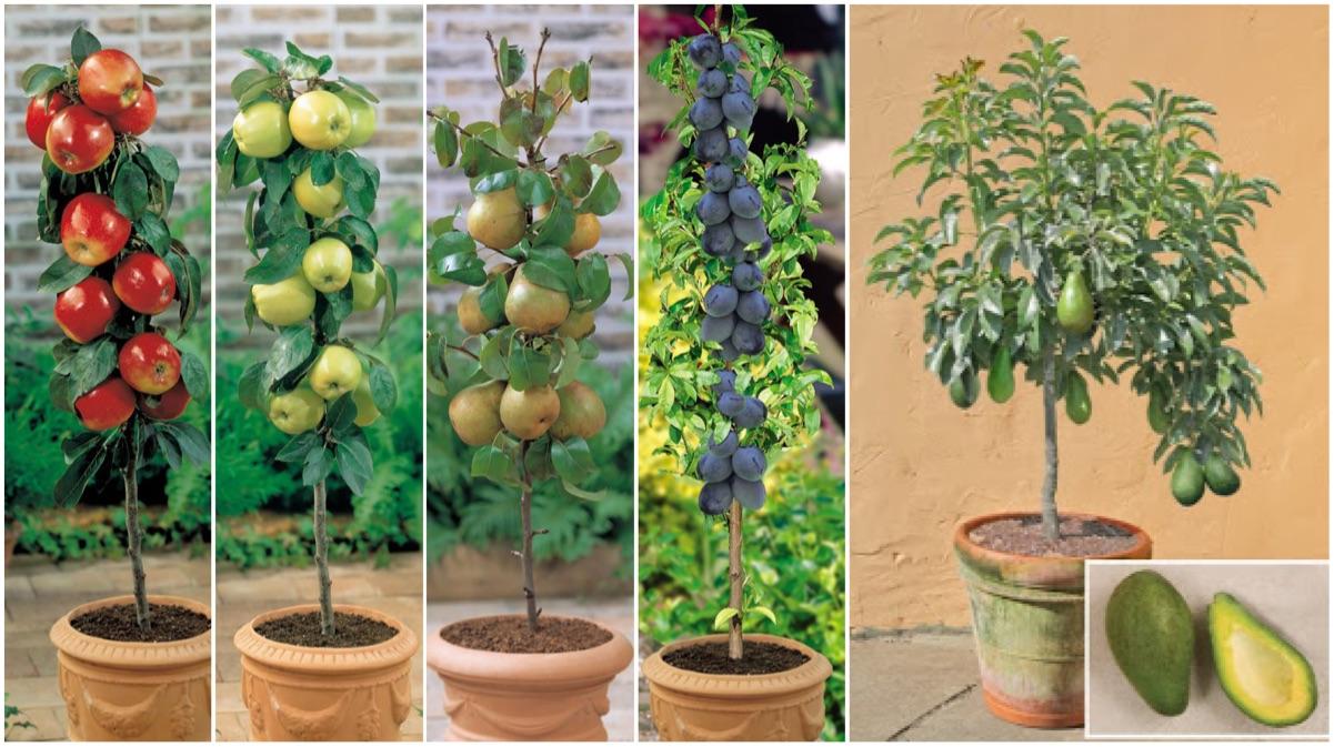 Sab as que puedes cultivar fruta sin tener un jard n for Plantas frutales