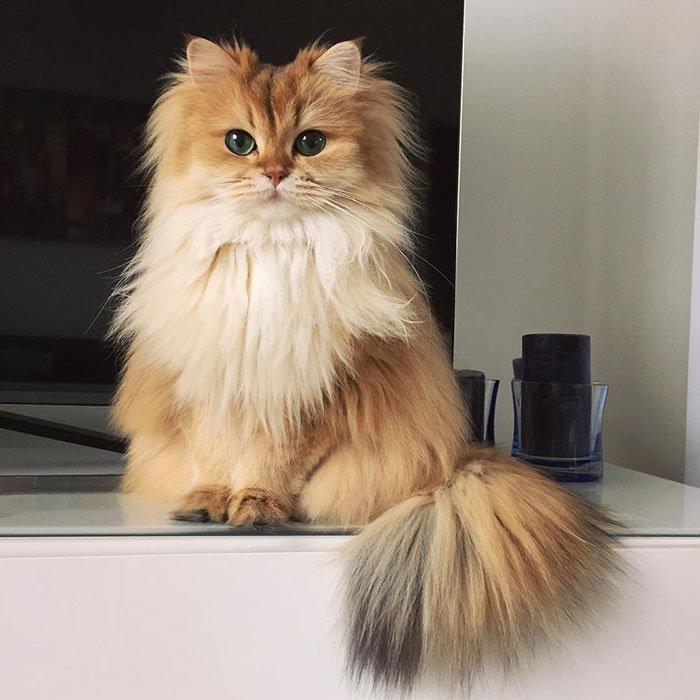 gato_fotogenico_10